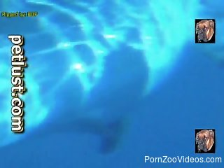 Dolphins are looking so freaking sexy, especially underneath